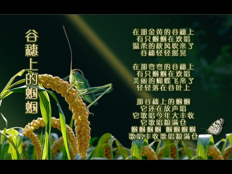 《谷穗上的蝈蝈》葫芦丝四重奏谱